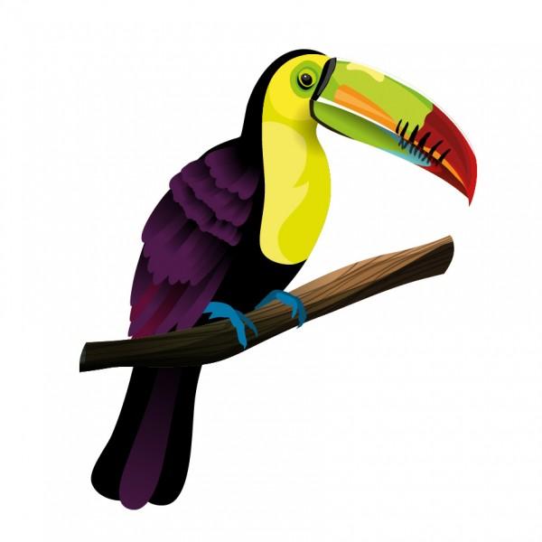 Tukan krátkozobý