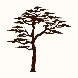 Africký akát