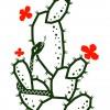 Kaktus a had