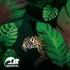 Amazonie - fototapeta